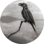 nb_calcifiedsongbird-11_lr